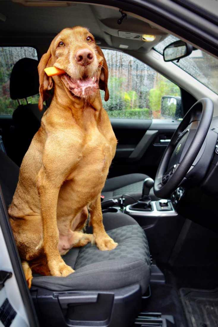 Car Travel Problems With Dogs