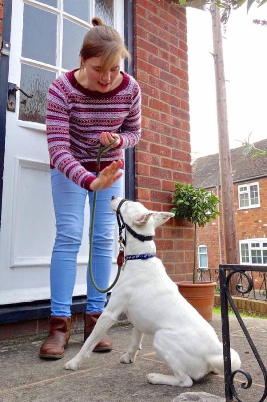 Importance Of Doorways For Dogs Behaviour