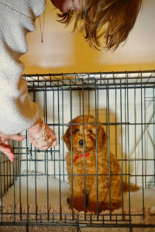Puppy Training Journey 4 First Nights With Your Puppy