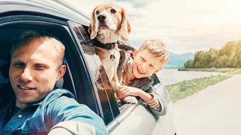 nickjones-doginsurancepage